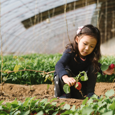 Child Picking Vegetable